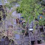 fyloma-garden